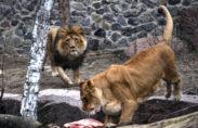 леви зоопарк