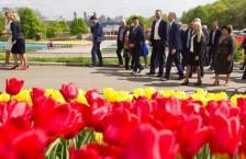 виставка тюльпанів